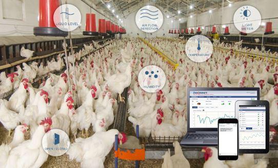 Aplicación de granja de pollos con sensores de monitoreo inalámbricos MONNIT